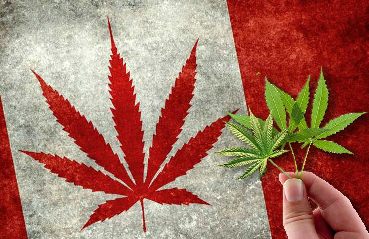 Canadian flag with cannabis leaves