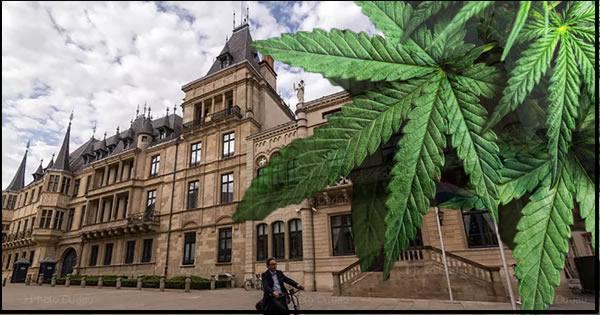 International Cannabis Business Conference Blog Kauai Berlin